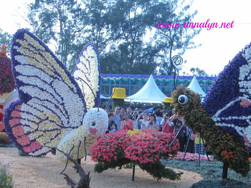 Flower Show, HK