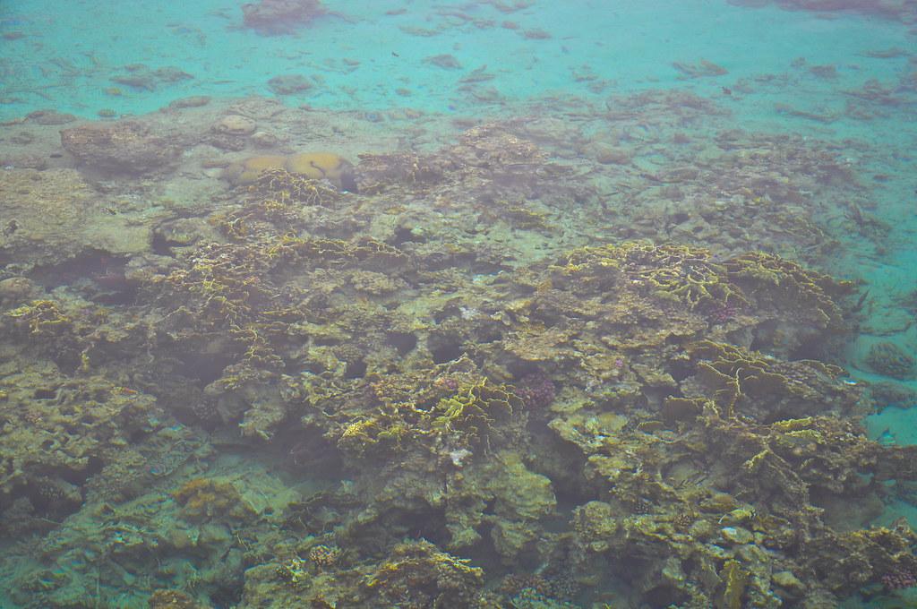 Soma Bay, Red Sea, Egypt 2