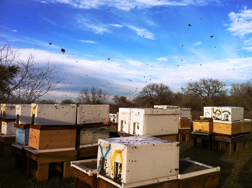 Nuc bees in flight