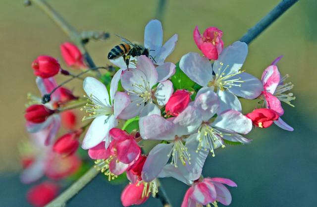 Busy Bee DSC_0390