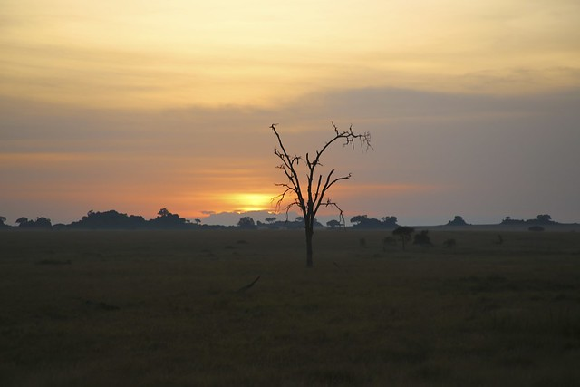The sunrises over the Serengeti