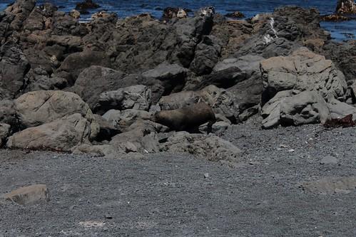 Beach Seal
