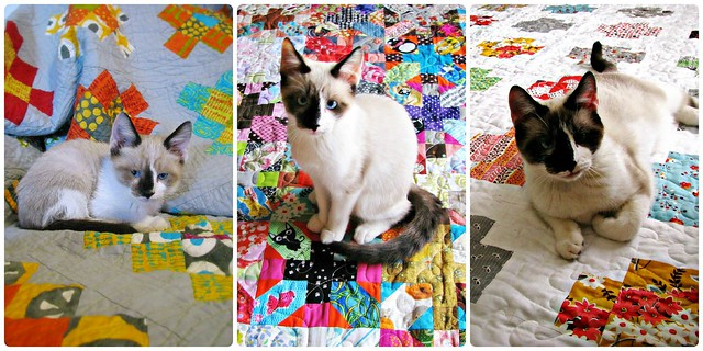 Diego Growing Up on Quilts