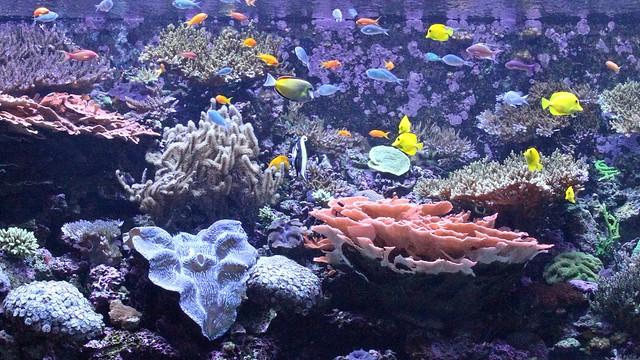 Aquatic oasis: A visit to the Seattle Aquarium