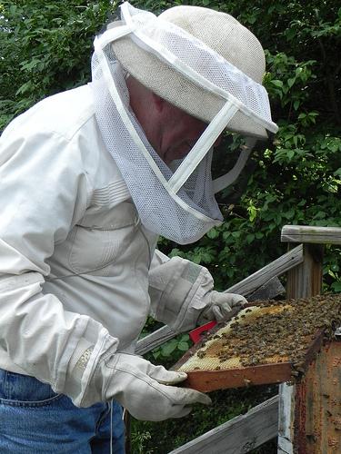 beekeeper Walt Dahlgren