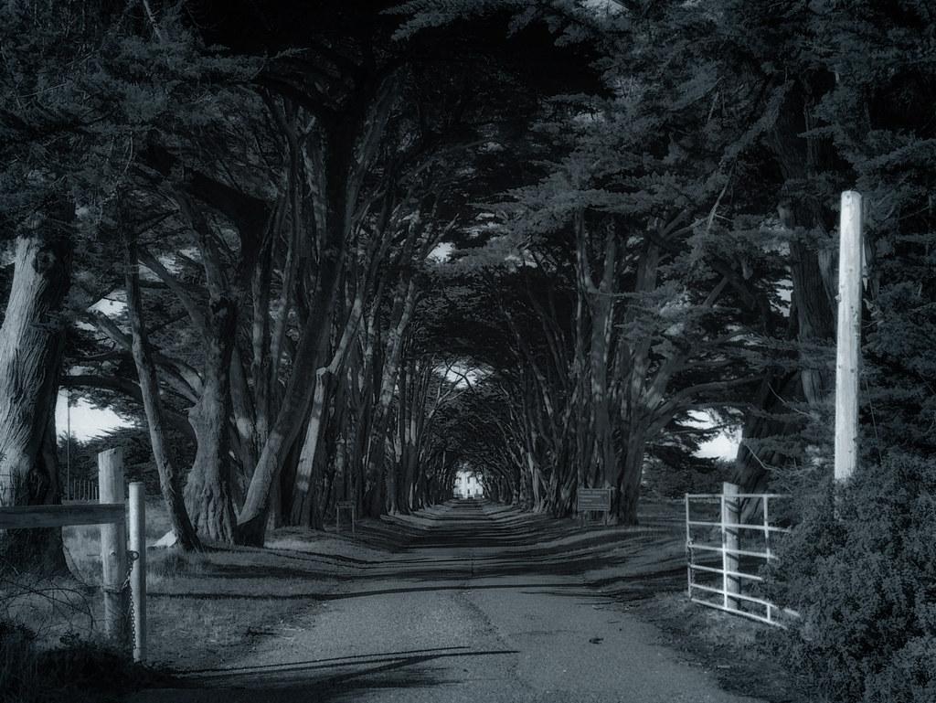 Radio Road - Point Reyes - 2013