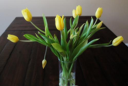 Yellow Tulips5