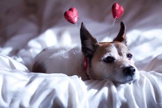 Love Dog / Love Sick