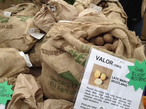 Valor Potato