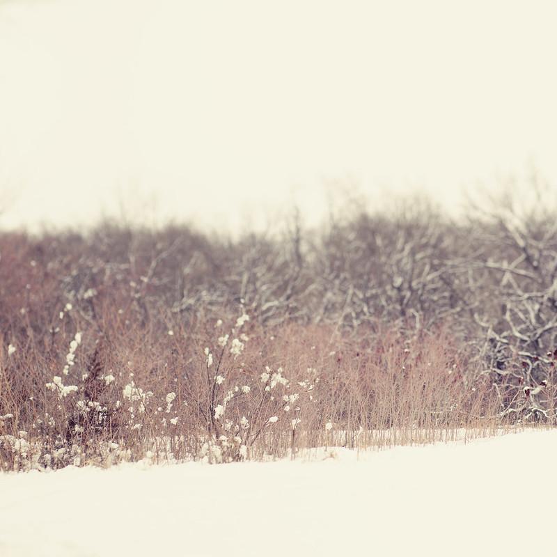 Fine Art Photography by Trina Baker