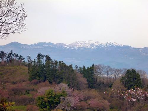 花見山公園 福島市(東北トリップ)