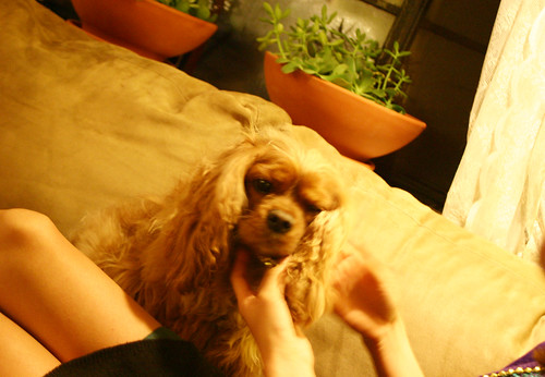 Pets for Jesse James