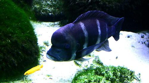 """Wilhelma, Im Aquarium , """"Fang mich doch ..."""" 64-17"""