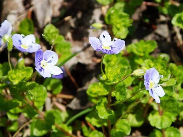 Ohio Wildflowers