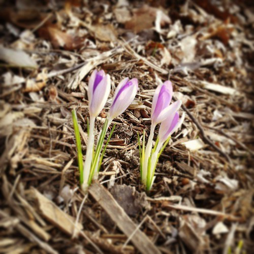 Signs of spring #RunnerPhotoChallenge