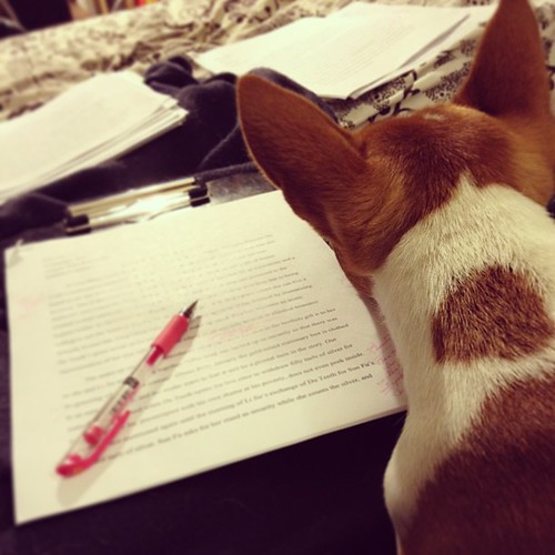Roll of 28, Day Nineteen: Grading assistant