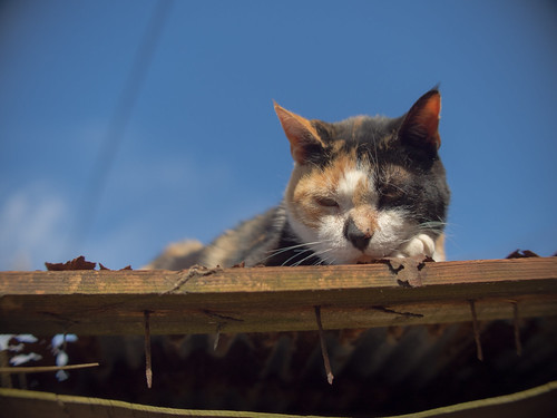 a cat in Enoshima