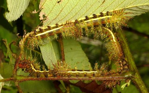 Caterpillar circle