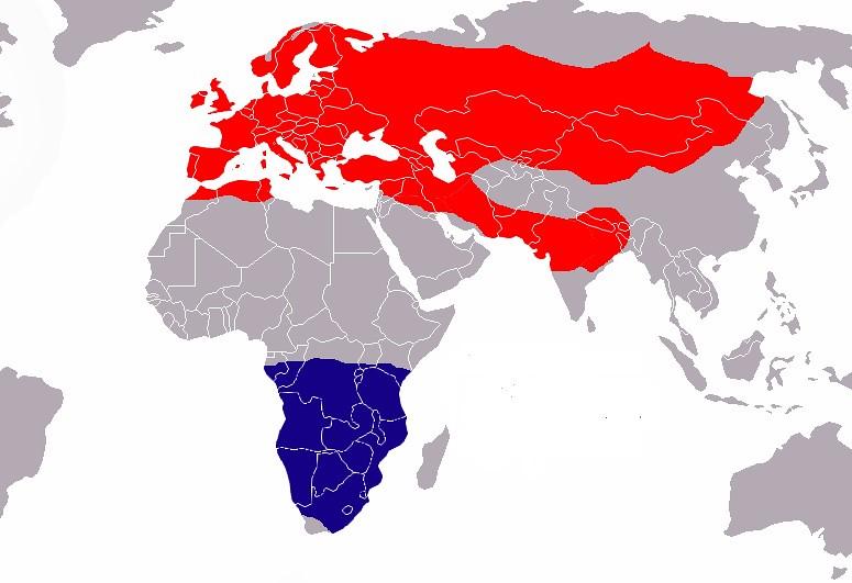 Área de distribución del vencejo común. En rojo, zona de cría. en azul, área de invernada. Autor, Jorisboschmans