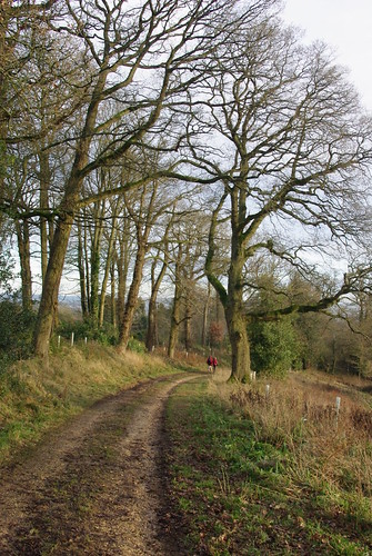 20121202-33_Cotswold Track - Near Batsford Arboretum by gary.hadden