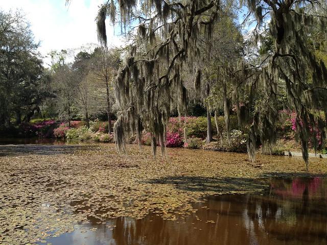 Charleston Plantation Middleton Place