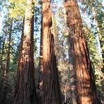 USA, PN Yosemite 25