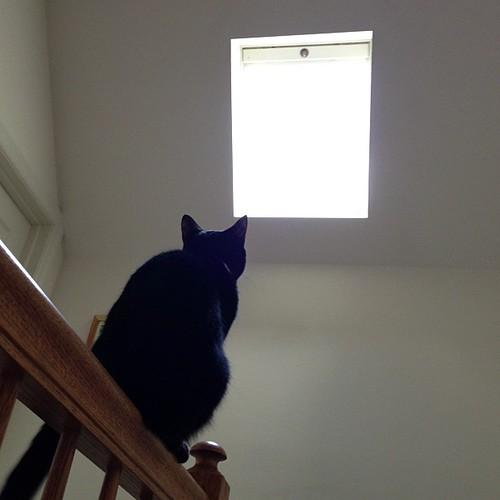 Skylight #cats #catsofinstagram