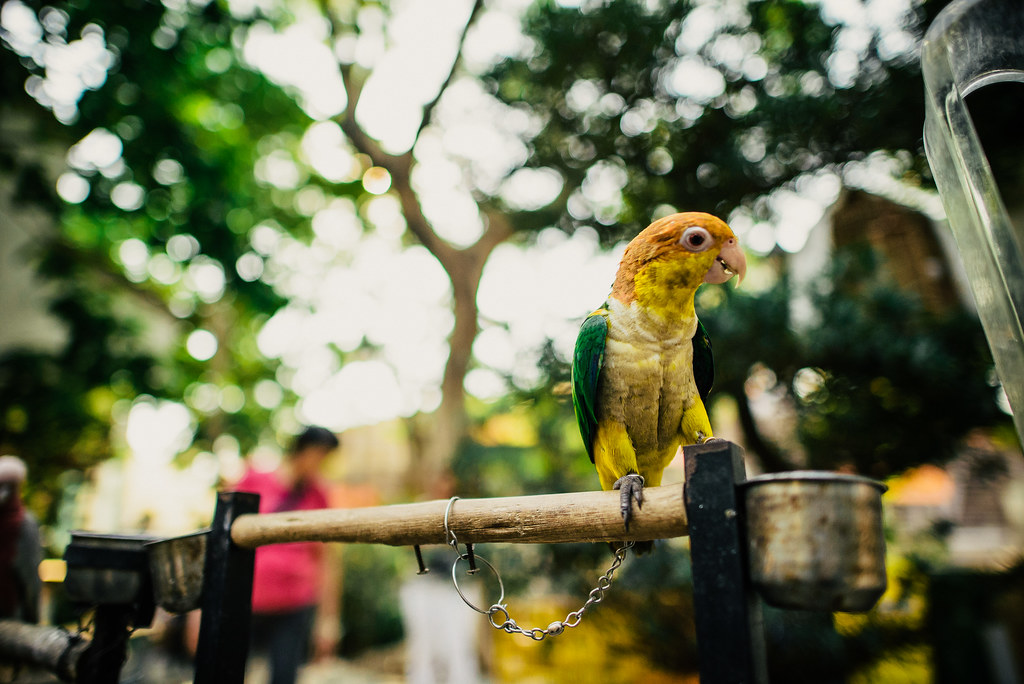 Yuen Po Street Bird Garden-12