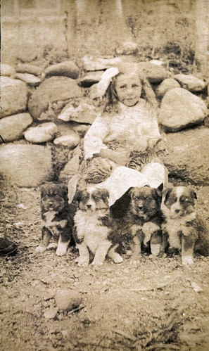 Girl with four puppies and cat