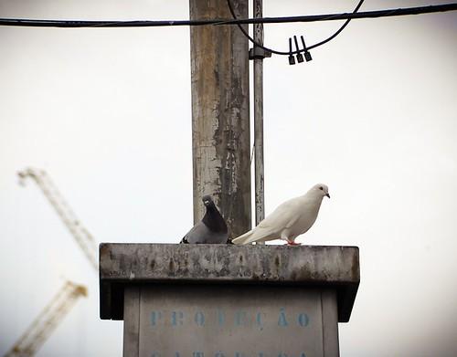 ...os pássaros.... by Elza Cohen