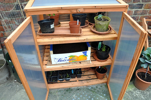 Crate placed in cold frame