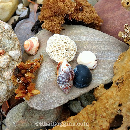 Sea shells, sponges, weeds, and rocks on the beach.
