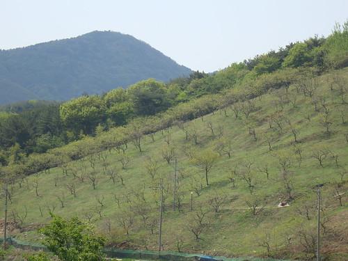 Yongcheon-ri