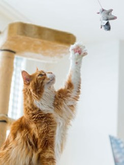 Every cat owner has had the experience of waking up to hear their cat meowing at night. Keep reading to learn how to get your cat to let you sleep at night.