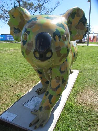 coolingatta koala