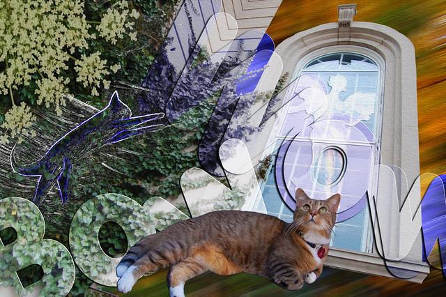 Feline Vision