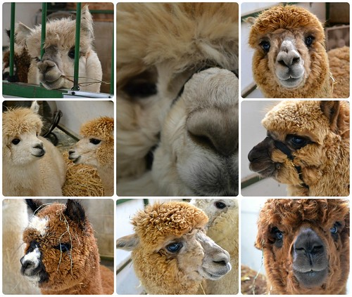 Friendly 'pacas