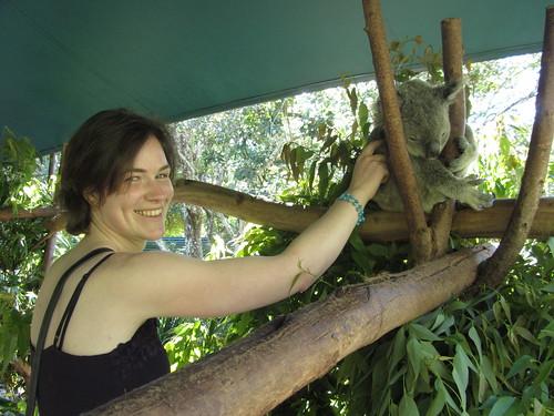 koala tickles