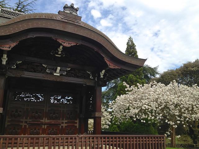 Kew cherry blossom Chokushi-mon