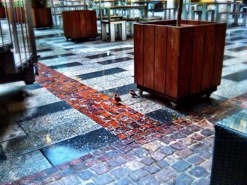 Autumn birds - 2010 by SpatzMe
