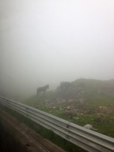 A horse in the clouds