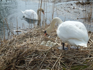April 7, 2013: Centurion Way, Dell Quay, Salterns Way & Chichester Canal
