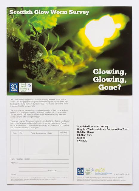 Glow worm postcard