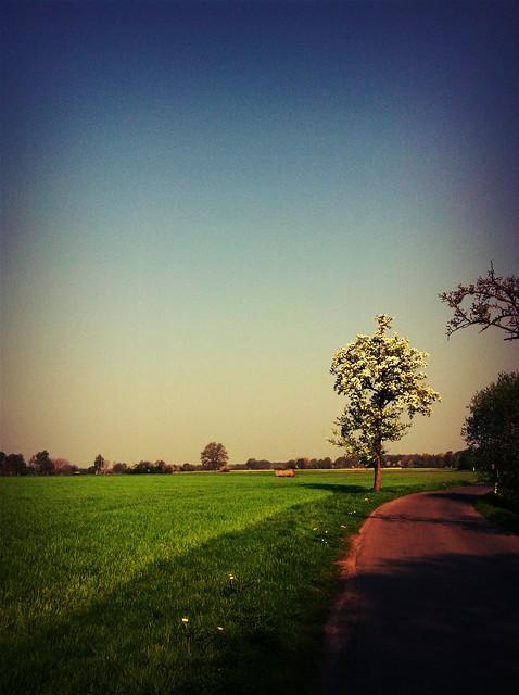 Friedewalde