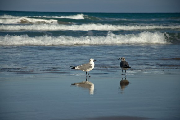 Two seagulls chatting