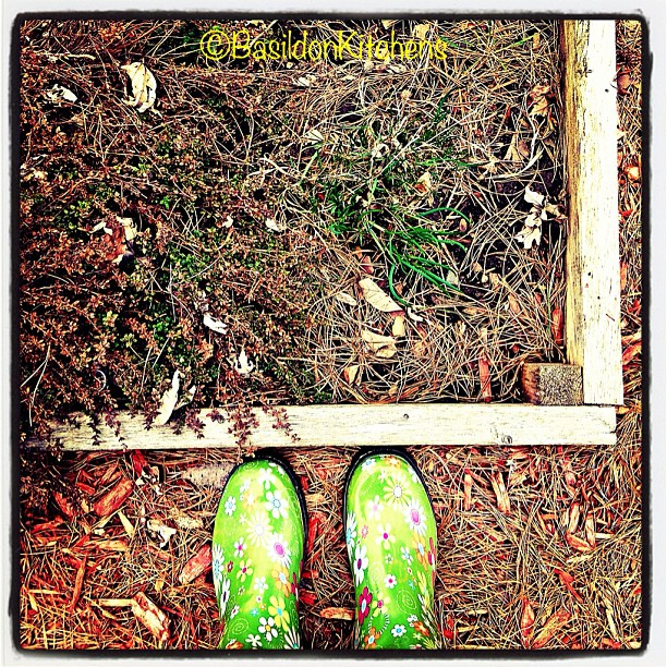 Apr 27 - earth {my corner of the earth; chives & thyme are starting...looks like a bit if clean up to be done} #fmsphotoaday #garden #chives #thyme #boots #earth