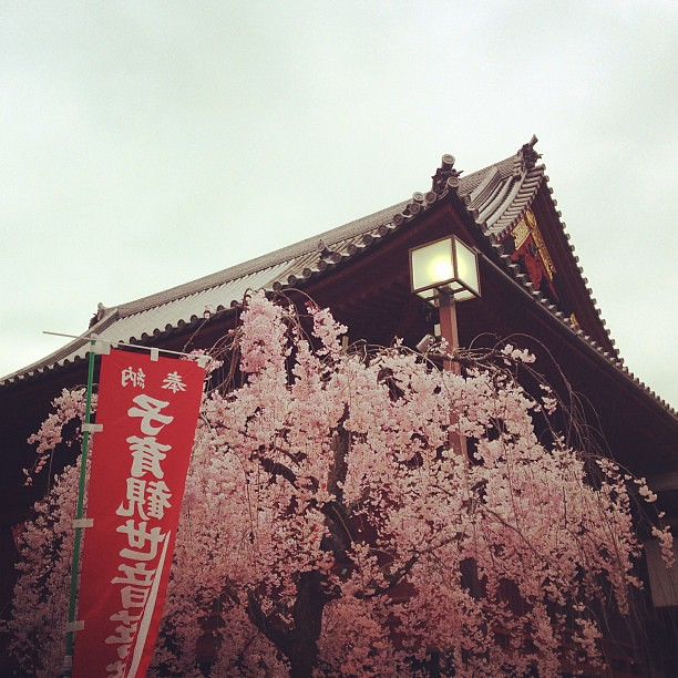 More #sakura at #Ueno Park this time :D #japan #cherryblossoms #lovejapan #travels