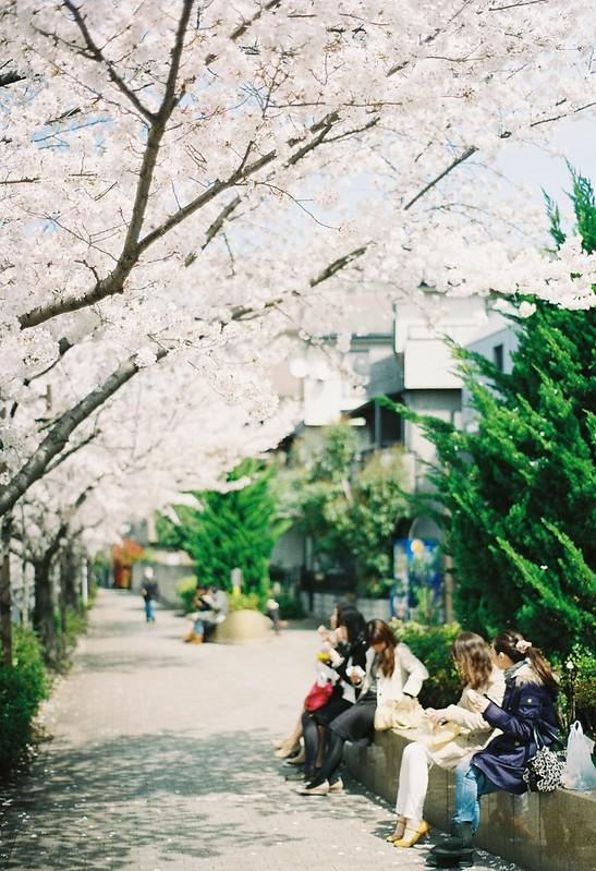 桜ランチ - SAKURA lunch
