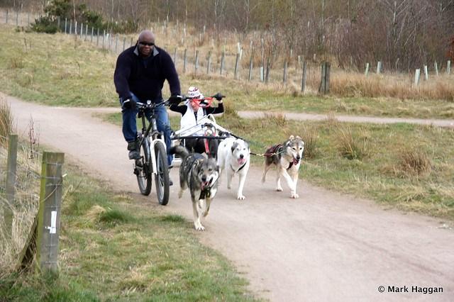 Husky powered travel