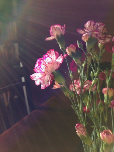 Flora/Sun Flares